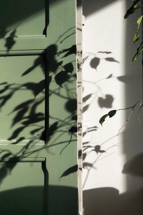 Ombres de plantes sur veille porte
